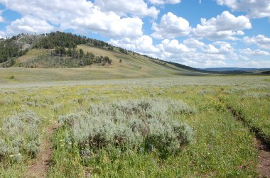 An expansive open meadow. Continuing straight from this junction would take you to the Glen Creek Trailhead.