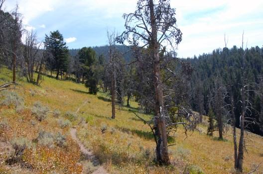 Hiking through the sage 2