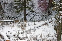 We saw many mule deer on this hike.