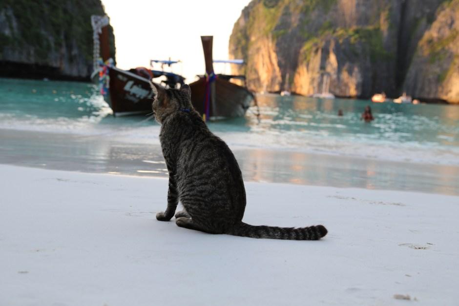 Maya Bay Kitty