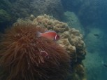 There were about 10 anemone (aka clown) fish living in here. Absolutely amazing.