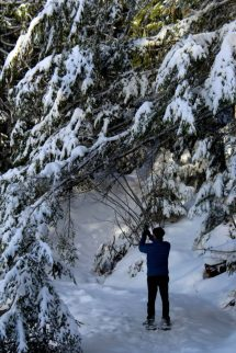 Snowshoeing Halcyon Hot Springs Nakusp Track Travel