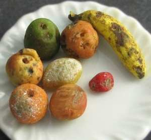 Decomposing Fruit