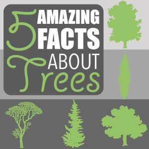 5 Amazing Facts About Trees