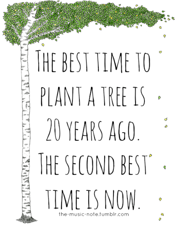 """Sustainability Quotes: """"The best time to plant a tree is twenty years ago. The second best time is now."""""""