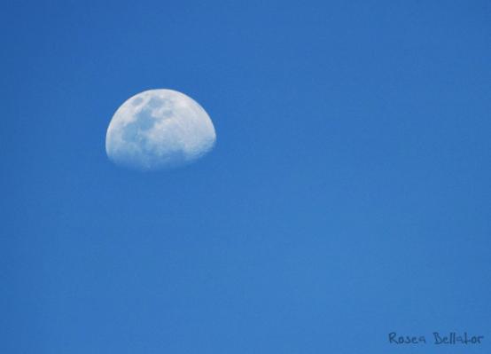 Lua Crescente tornando-se Cheia, alcançando sua Plenitude. Foto: Rosea Bellator.