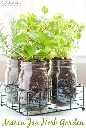 Make your own herb garden using simple mason jars.