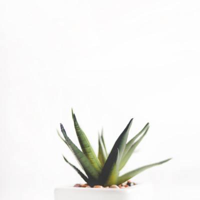 7 Amazing Health Benefits of Aloe Vera You'll Wish You Knew Sooner