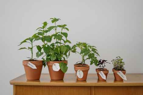 photo of potted plants on wooden table