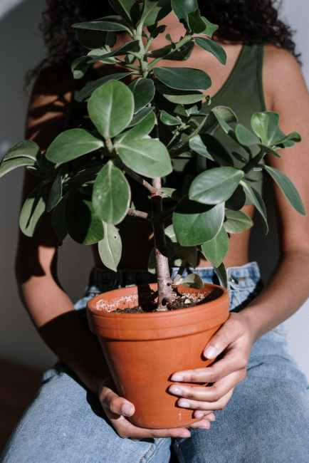 hands woman sitting plant
