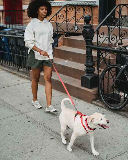 calm black woman walking with dog on street
