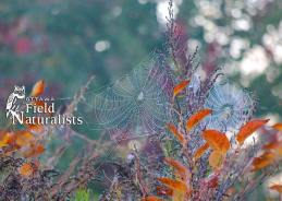 Cobwebs of Petrie Island, By - Keiko T. Grundison