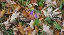 Fall Flowers - By, Gordon Johnston