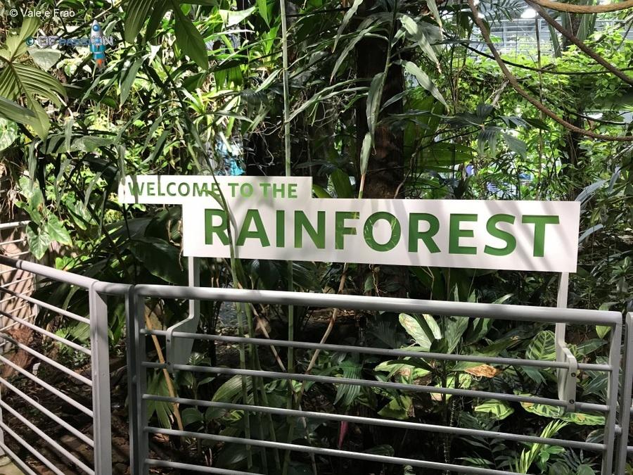 rainforest foresta tropicale accademia della scienza san francisco valeria cagnina francesco baldassarre