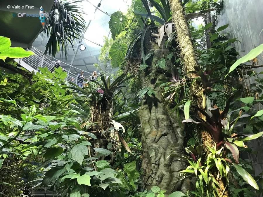 foresta tropicale all'interno del museo della scienza san francisco valeria cagnina francesco baldassarre ofpassion