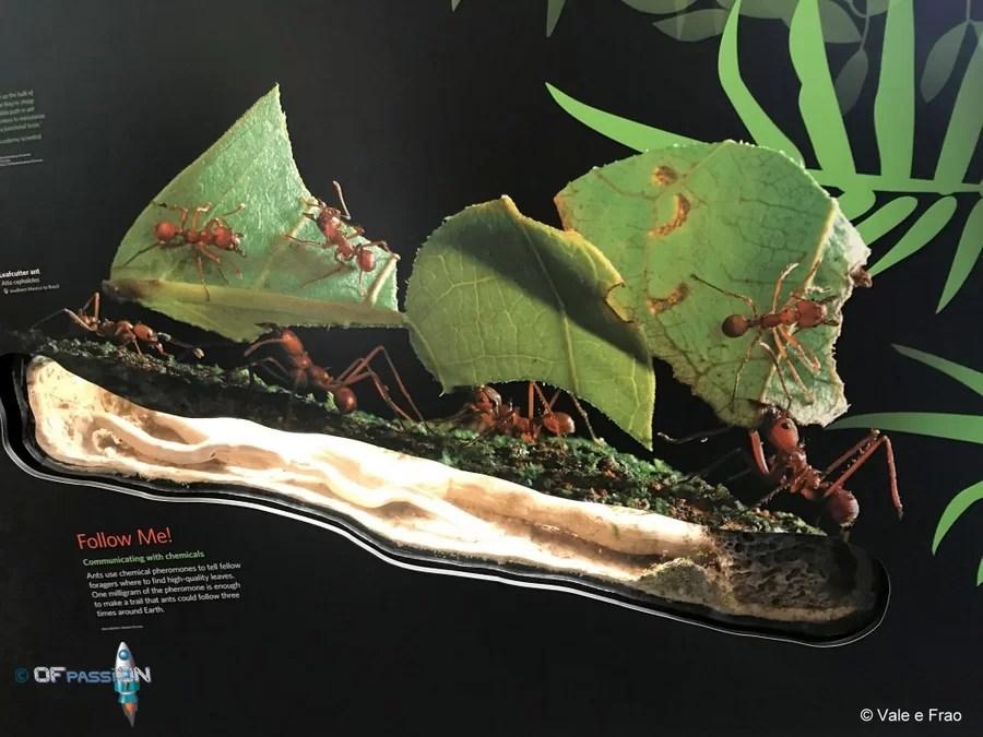 san franscisco california museo della scienza valeria cagnina francesco baldassarre