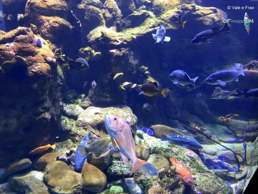 acquario accademia della scienza california san francisco ofpassion