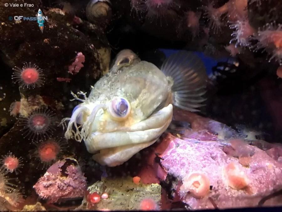 pesci notturni california san francisco ofpassion valeria cagnina francesco baldassarre