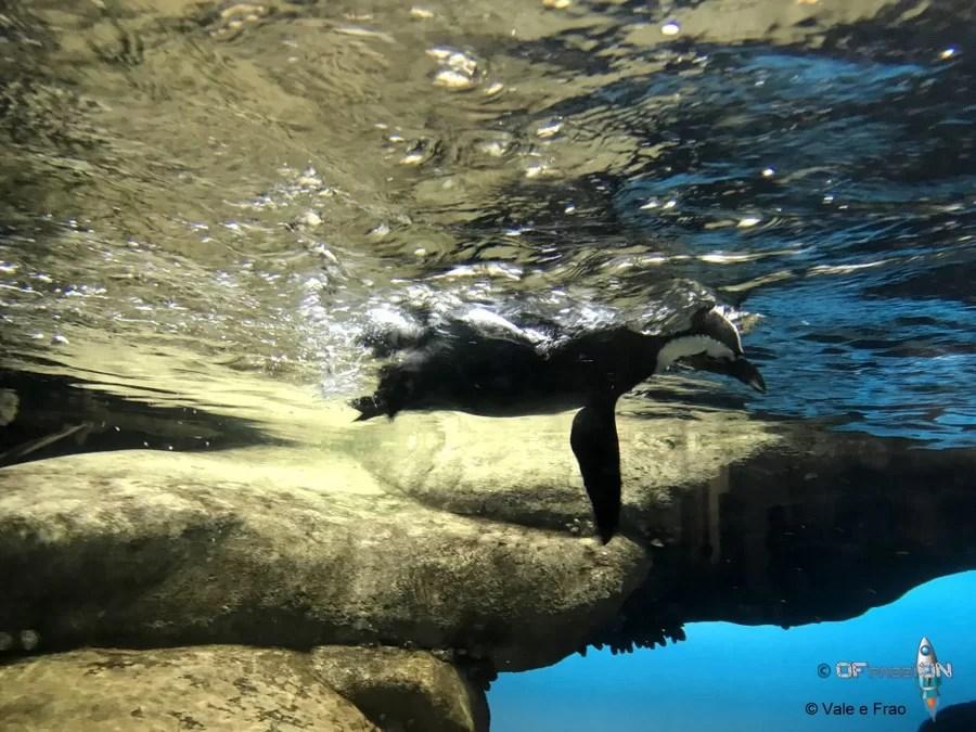 pinguino museo della scienza california san francisco ofpassion valeria cagnina francesco baldassarre