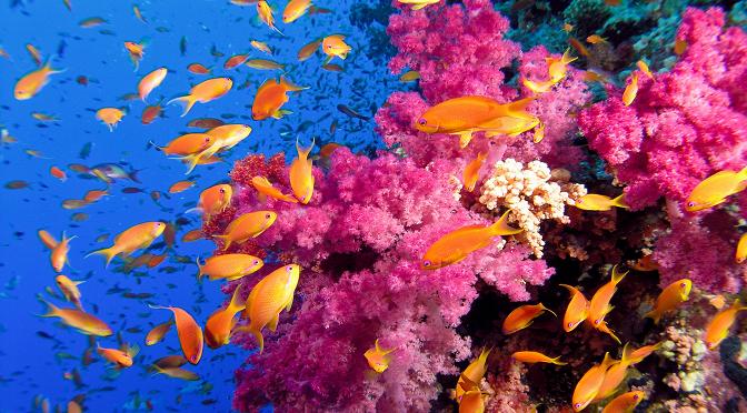 """יוזף רות, """"הלוויתן"""": מה קרה לסוחר האלמוגים שהשתוקק להגיע אל הים"""