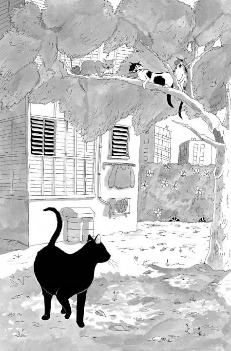 מין חתולה את יוסף 4