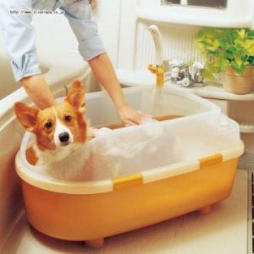 ペット用バスタブで体を洗う犬