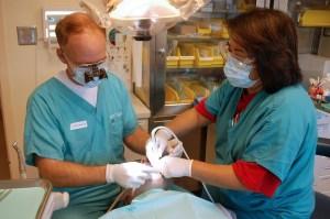 dentist-job