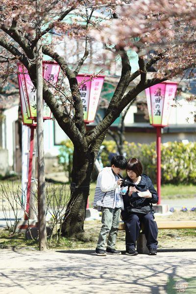 酒田日和山公園桜祭りへ行ってきた。