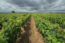 wijngaarden Loire