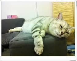 血糖方面貓咪身體怎麼分工