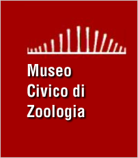 museo_zoologia_jpg_w202_h