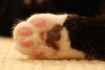 800px-Cat_paw_(cloudzilla)