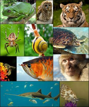 500px-Animal_diversity_October_2007