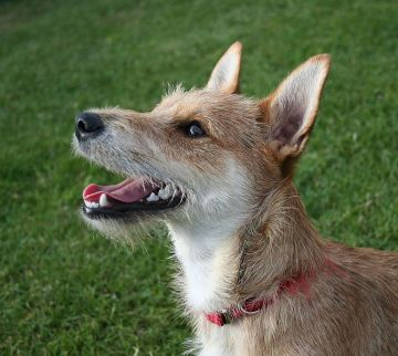 670px-Terrier_mixed-breed_dog