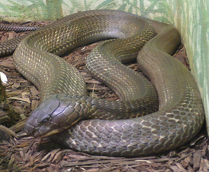 Tossine e digestione: il genoma dei serpenti