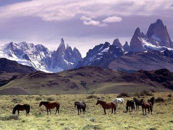 800px-Cavalli_Al_Pascolo_Ai_Piedi_Del_Massiccio_Del_Fitz_Roy,_Patagonia