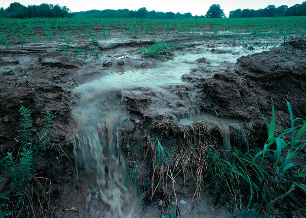 Unprotected farm fields yield topsoil as well as farm fertilizers and other potential pollutants when heavy rains occur.