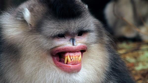 sn-monkeys_0