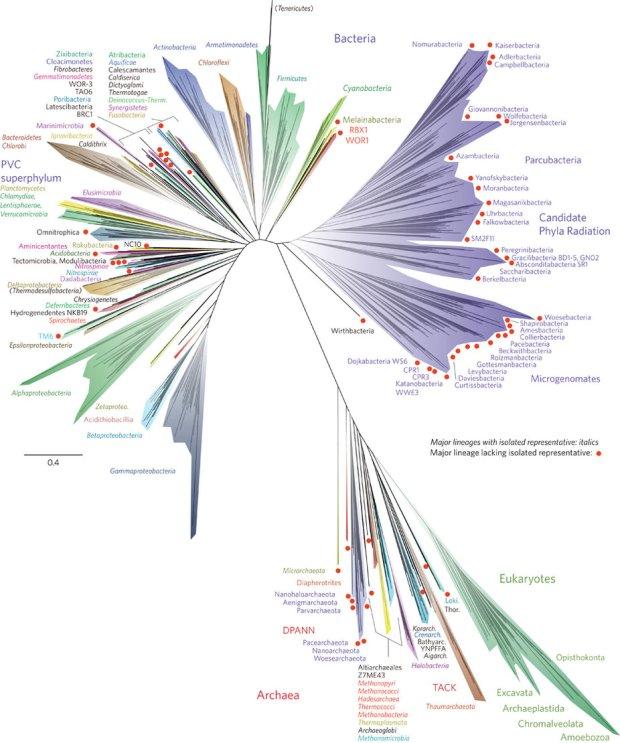 albero vita genoma batteri