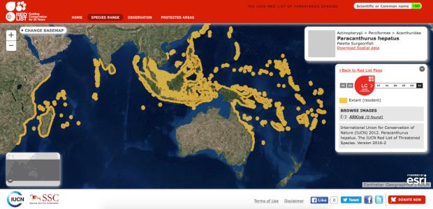 paracanthurus hepatus mappa diffusione