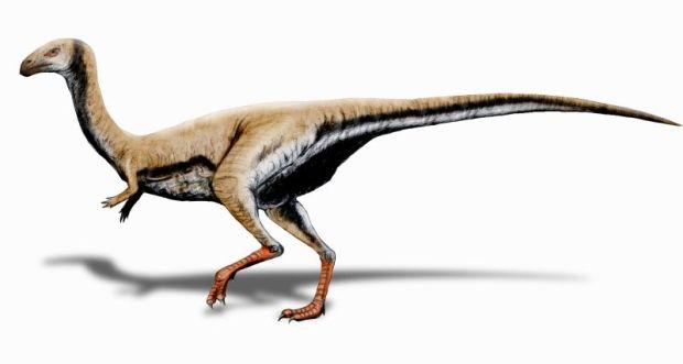 limusaurus_inextricabilis