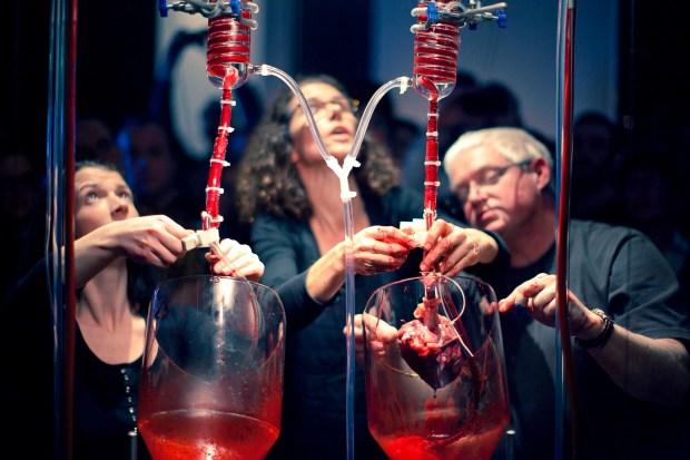 Blood, Science Gallery, Dublin
