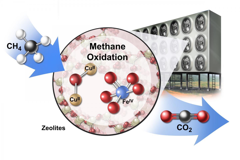 il metano influisce sullerezione