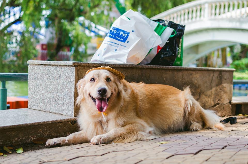 gestione del peso sazietà canino royal catania