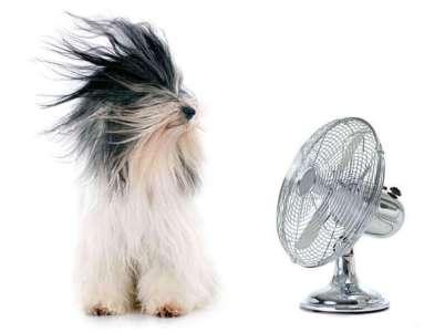 電風扇吹狗