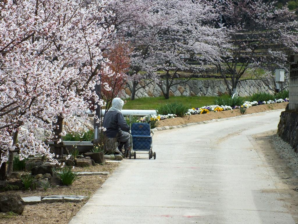 Repos Sous Les Cerisiers