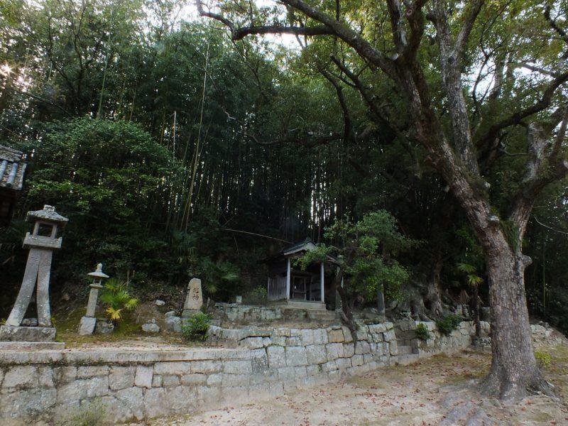 21 - Camphrier sur Teshima