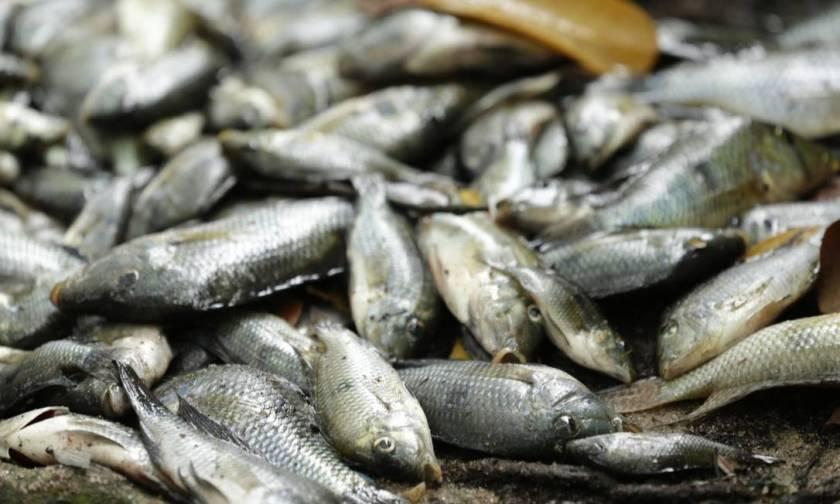 Black urine disease is associated with consumption of contaminated fish Photo: Gabriel de Paiva / Gabriel Paiva