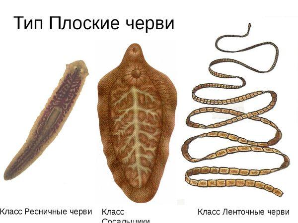 Pinworm biohelminth vagy geohelminth - A leghatékonyabb tabletták paraziták kezelésére