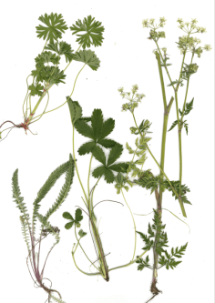 Scan of representative plants from the meadow